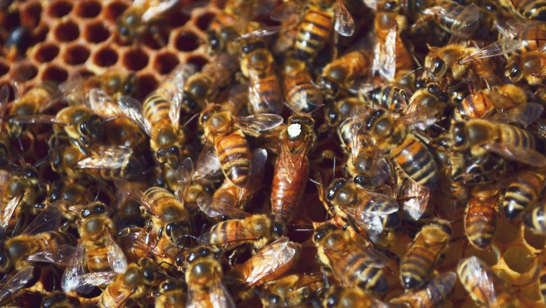 Miks planeet Maa vajab mesilasi?